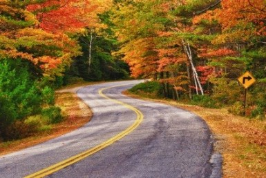winding road in foliage