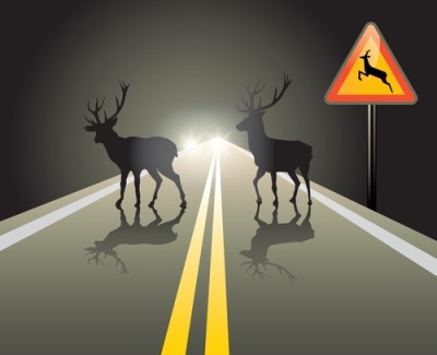 deer-in-highway