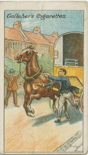 runaway-horse