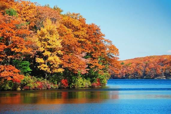 colorful gall foliage by a lake